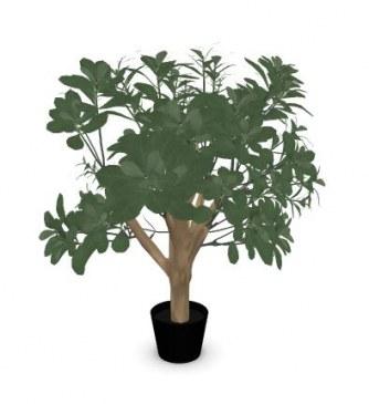 Febru Pittosporum kunstplant 65 cm  591155 0